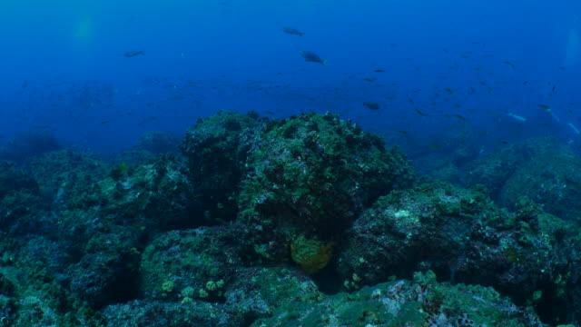 海底のサンゴ礁、熱帯魚の学校 - チャールズ・ダーウィン点の映像素材/bロール