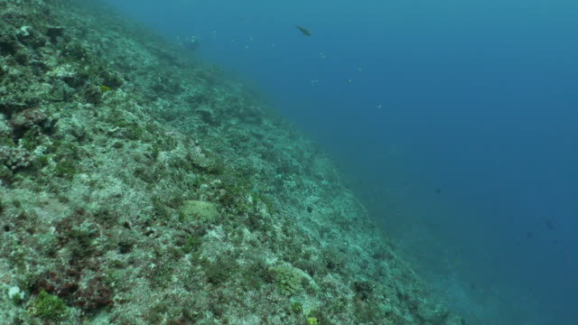 undersea coral reef slope in orchid island, taiwan - philippine sea stock videos & royalty-free footage