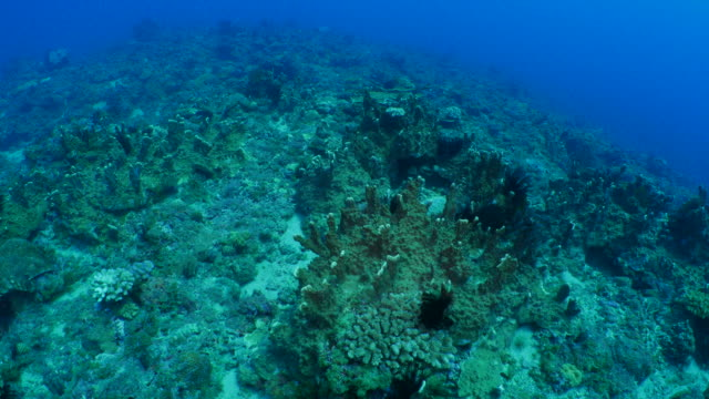 Undersea coral reef, Taiwan