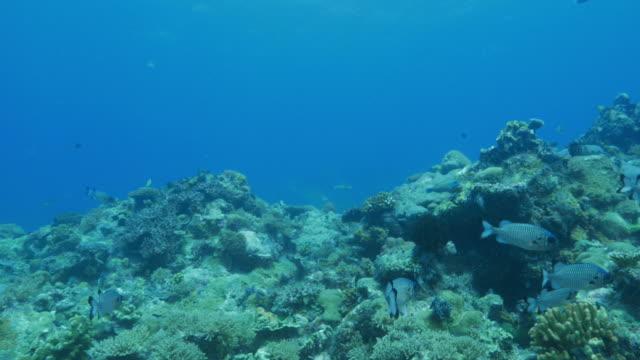 Onderzeese koraalrif