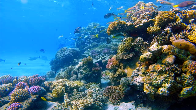 Undersea coral reef with lot of fish on Red Sea