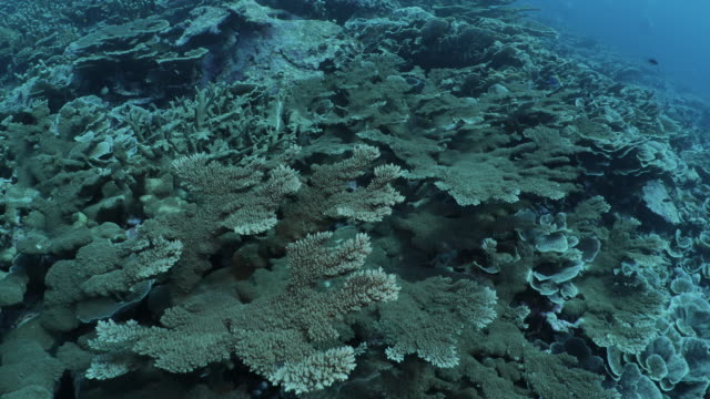undersea diving at deep sea hard coral reef - hard coral stock videos & royalty-free footage