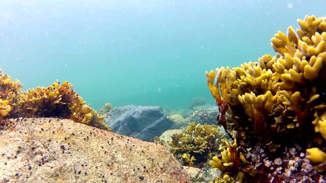 vídeos y material grabado en eventos de stock de paisaje submarino 1 - lecho del mar