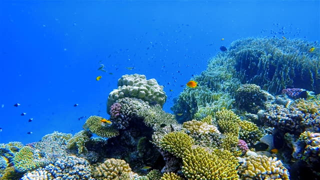 Undersea life on beautiful coral reef with lot of tropical Fish on Red Sea nearby Marsa Alam