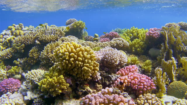 Undersea life on colorful coral reef with lot of tropical Fish / Red Sea