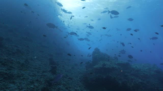 vídeos de stock, filmes e b-roll de montanha submarina com um cardume de peixes - ponto de vista de mergulhador