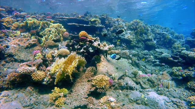 vídeos de stock, filmes e b-roll de submarino no mar vermelho com muitos peixes - coral cnidário