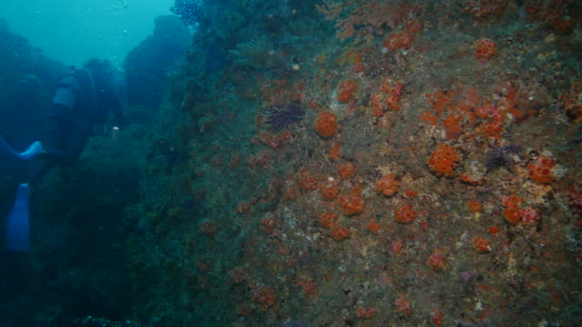 undersea pinnacle covered with soft coral - soft coral stock videos & royalty-free footage