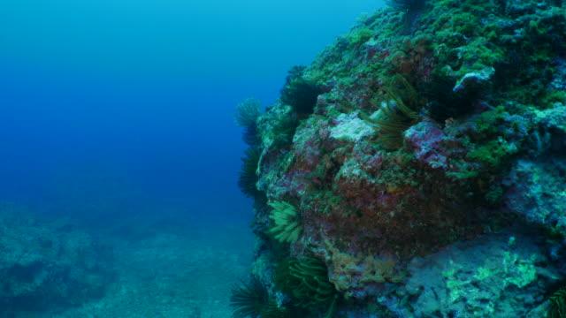 Undersea pinnacle in coral reef, Taiwan