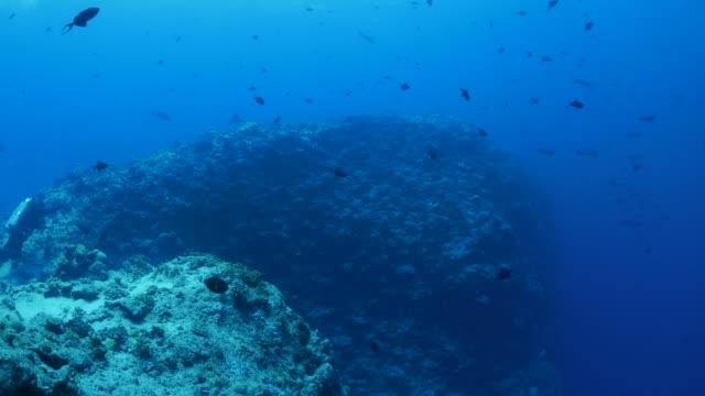 きたサンゴ礁の水中観察 - 野生生物保護点の映像素材/bロール