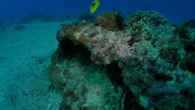 Undersea pinnacle in coral reef