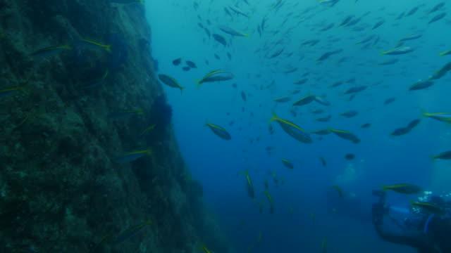 Undersea pinnacle, Japan