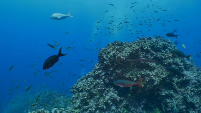 魚、ガラパゴスの群れと海底のピナクル - チャールズ・ダーウィン点の映像素材/bロール
