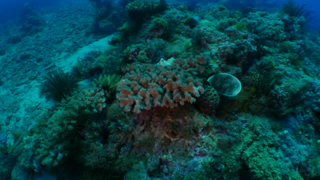 Undersea pinnacle with sea lily and finger coral