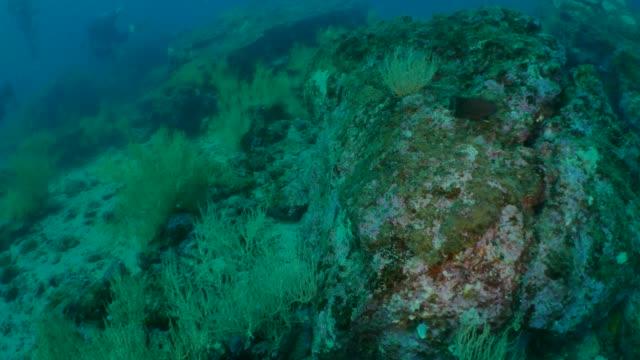 unterwasser riff auf den galapagos inseln - seegras segge stock-videos und b-roll-filmmaterial