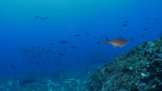 ウルフ島、ガラパゴスで海底のリーフ - チャールズ・ダーウィン点の映像素材/bロール