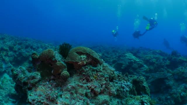 Undersea reef, Liuqiu, Taiwan