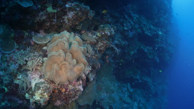 undersea reef, soft coral - soft coral stock videos & royalty-free footage