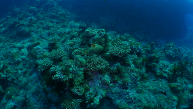 Undersea reef with coral colony and fish