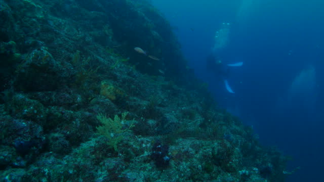 undersea reef with soft coral - soft coral stock videos & royalty-free footage