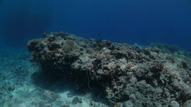 Undersea rock with coral in Indonesia