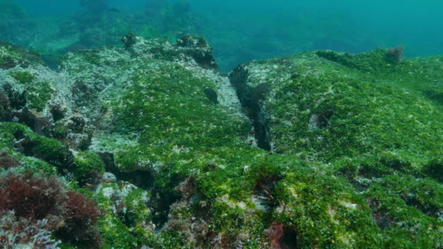 Undersea rock with sea grass and moss at Galapagos