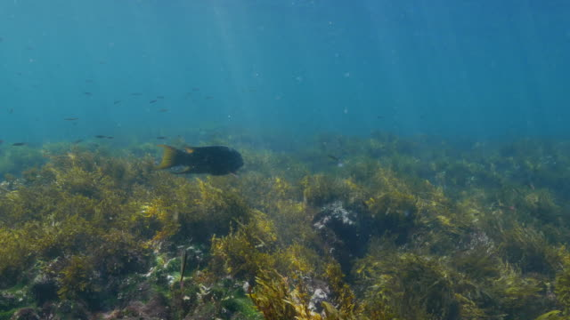 undersea seagrass meadow with sunlight, galapagos - sea grass plant video stock e b–roll