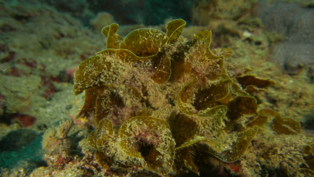undersea seaweed - subtropical climate stock videos and b-roll footage