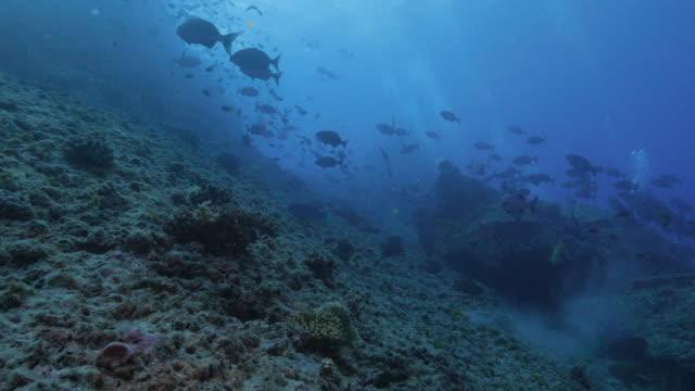 vídeos de stock, filmes e b-roll de inclinação submarina com um cardume de peixes - ponto de vista de mergulhador