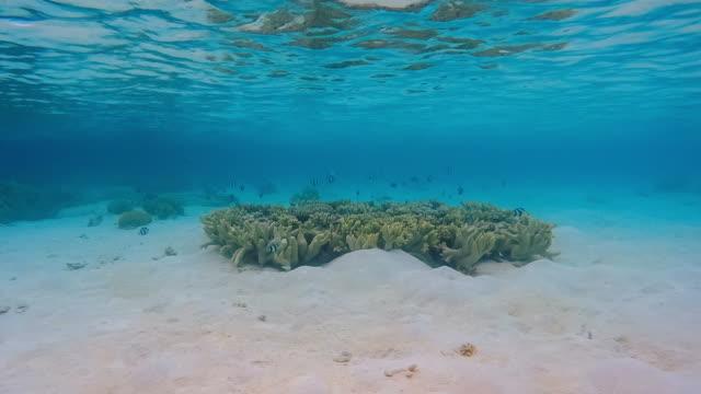unterwasser-timelapse auf exotischen coral - exotik stock-videos und b-roll-filmmaterial