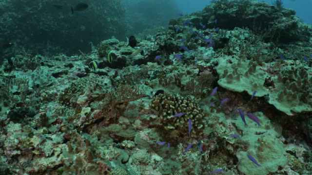 undersea tropical coral reef at orchid island, taiwan - philippine sea stock videos & royalty-free footage