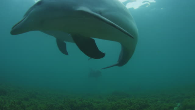 underwater la 3 bottlenosed dolphins swim over camera  - small group of animals stock videos & royalty-free footage