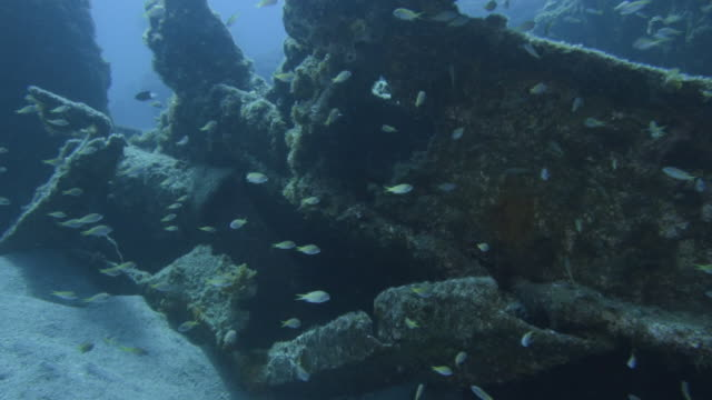 underwater, a school of fish and sunk vessel, ogasawara, japan - wrack stock-videos und b-roll-filmmaterial