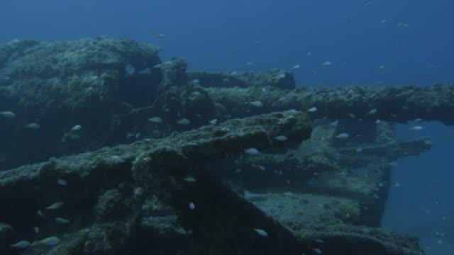vidéos et rushes de underwater, a school of fish and sunk vessel, ogasawara, japan - guerre du pacifique