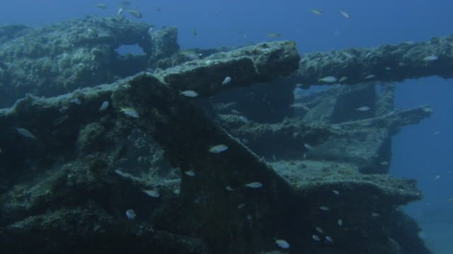 underwater, a school of fish and sunk vessel, ogasawara, japan - cannon stock videos & royalty-free footage