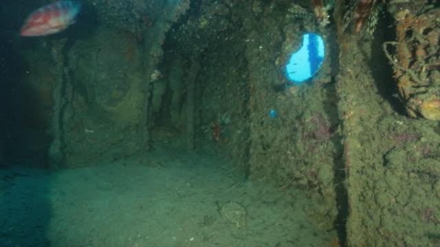 vídeos y material grabado en eventos de stock de underwater, a school of fish in wreck, ogasawara, japan - rascacio