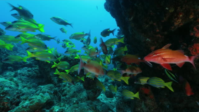 underwater, a school of fish, ogasawara, japan - tropischer fisch stock-videos und b-roll-filmmaterial