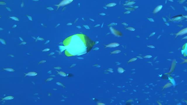 Underwater; A School Of Fish, Okinawa, Japan