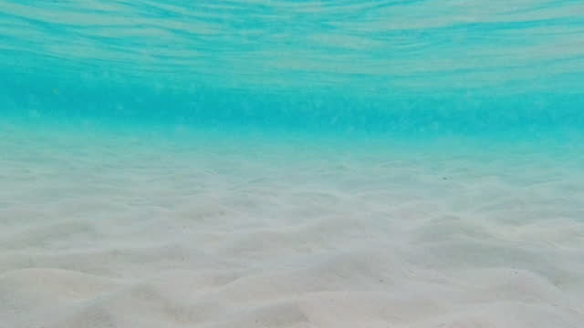 underwater and sunset view from maldives - seabed stock videos & royalty-free footage
