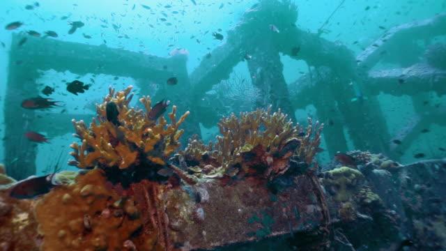 underwater artificial reef coral nursery - restoring stock videos & royalty-free footage