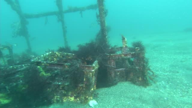 vídeos y material grabado en eventos de stock de underwater, artificial spawning bed for squid, izu oshima, japan - molusco