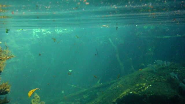 vídeos de stock, filmes e b-roll de subaquática no cenote em a península de iucatã, no méxico - yucatán