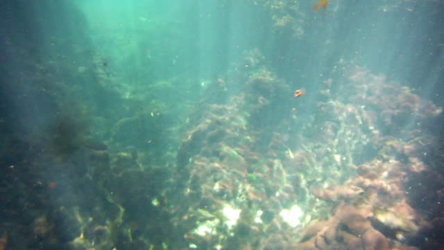 Underwater at Cenote in the Yucatán Peninsula, Mexico