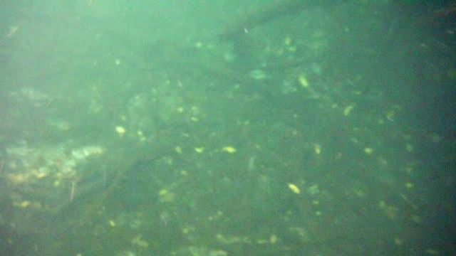 vídeos y material grabado en eventos de stock de submarino en el cenote en la península de yucatán, méxico - alga marina
