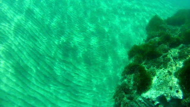 underwater at the sardinian coast - digital camcorder stock videos & royalty-free footage
