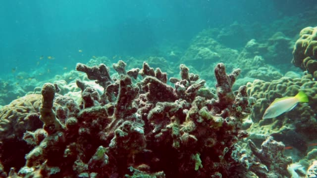 underwater bleached coral on coral reef - coral cnidarian stock videos & royalty-free footage