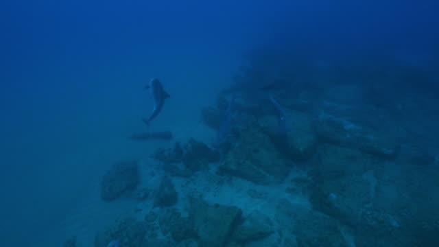 vídeos y material grabado en eventos de stock de underwater ha bottlenosed dolphins playing over reef - cuatro animales