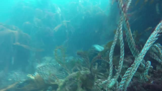underwater cameraman ben burville, who is a... - ecosystem stock videos & royalty-free footage