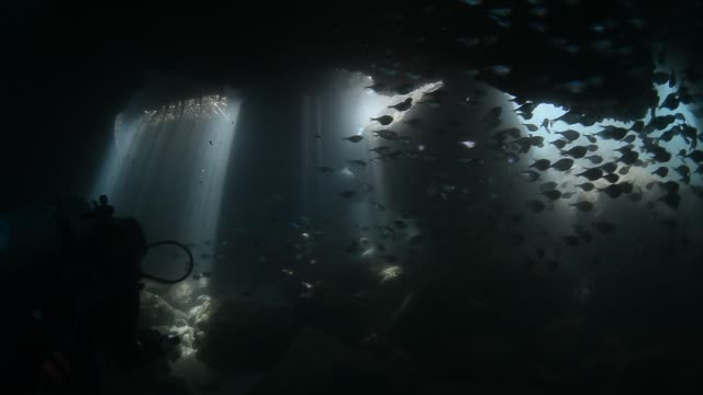 underwater cave and diver. - explorer stock videos & royalty-free footage