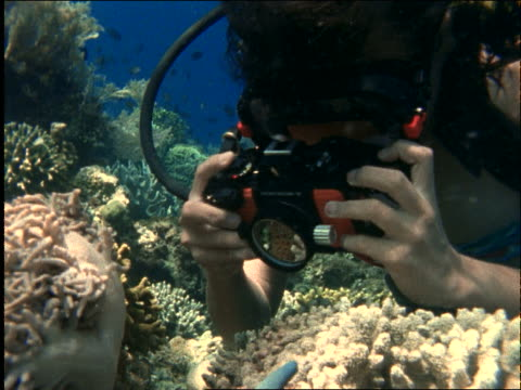 underwater close up of woman scuba diver taking photographs / buniken island / manado, celebes / indonesia - tauchgerät stock-videos und b-roll-filmmaterial